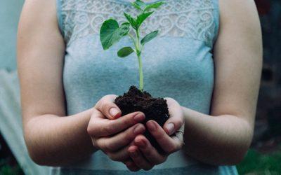5 apróság, amivel elkezdheted vállalkozásod is környezettudatosan működtetni…